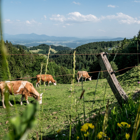 Livestock farmers are not the problem, they may be the solution