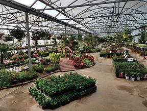 Printemps plantation 2021 verveine zinnia laurier fleur nerium oleander