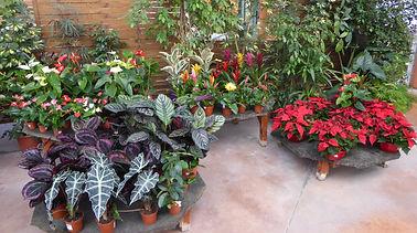 plantes fleuries