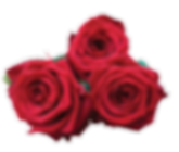 Roses3.png