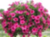Suspensions jardinière potee fleuries