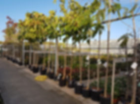 Arbres d'ornements, arbres fruitiers