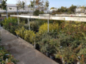 Arbustes, plantes de haies