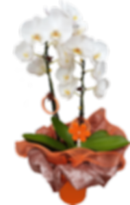 Orchid-2.png