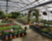 Printemps annuells geranium petunia begonia dahlia impatiens