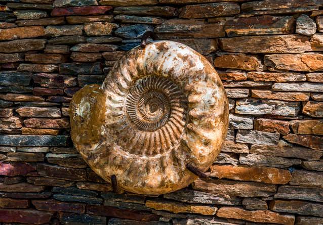 Villa Ammonite