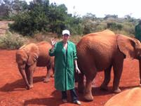 elephants orph.jpg