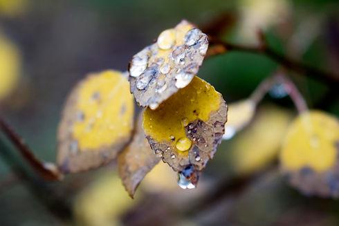 Chasing_Yellow_Trees_Fall_2017_13.jpg