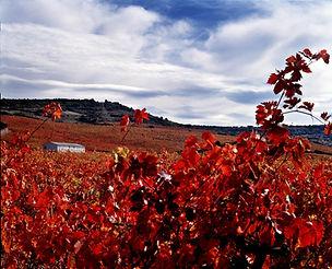 viña_Ardanza.jpg.2000x0_q85_crop.jpg