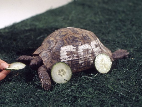 Tortoise – the future of journalism or hare brained?