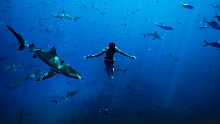 SHARKS_.jpg
