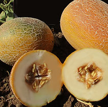 Melon Ananas.jpg