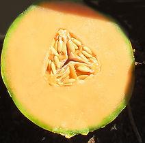 Melon Charentais .jpg