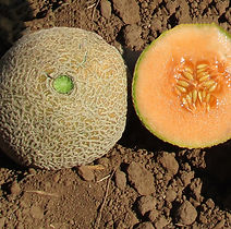 topmark, melon.jpg