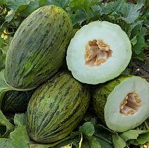 Piel de Sapo, Melon.jpg