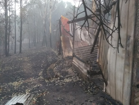 Wildlife Carer Escapes Unprecedented Fire to Look after Native Animals