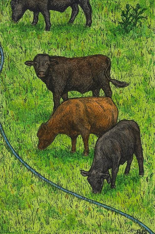 Hagg Hill Bullocks