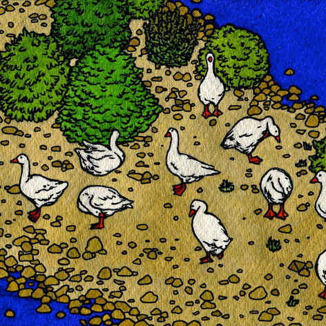 Don Goose Island