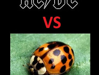 AC/DC vs Beetles