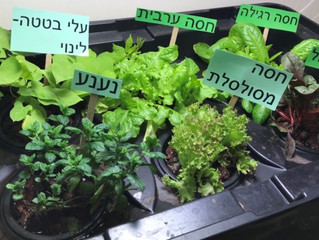 孩子们在城市的水泥园里种植沙拉绿。 Kids grow salad greens, on an urban concrete schoolyard.