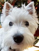 white_dog.jpg