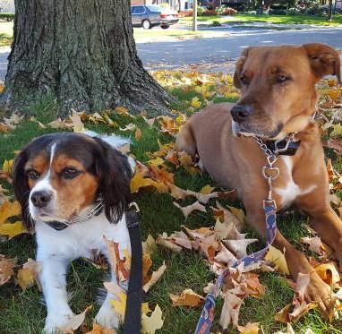 2_dogs_in_grass.jpg