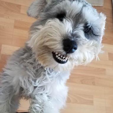 dog_smiling.jpg