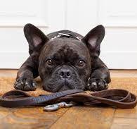 dog_with- leash.jpeg
