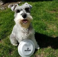 Dog_with_frizby.jpg