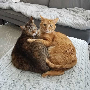 two_cats_hugging.jpg