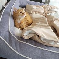 Cat_on_bed.jpg