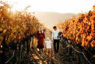 Napa valley family photo session, Diana Jex Photography