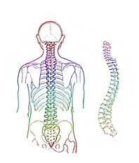 spine-257870_1920 (1).png