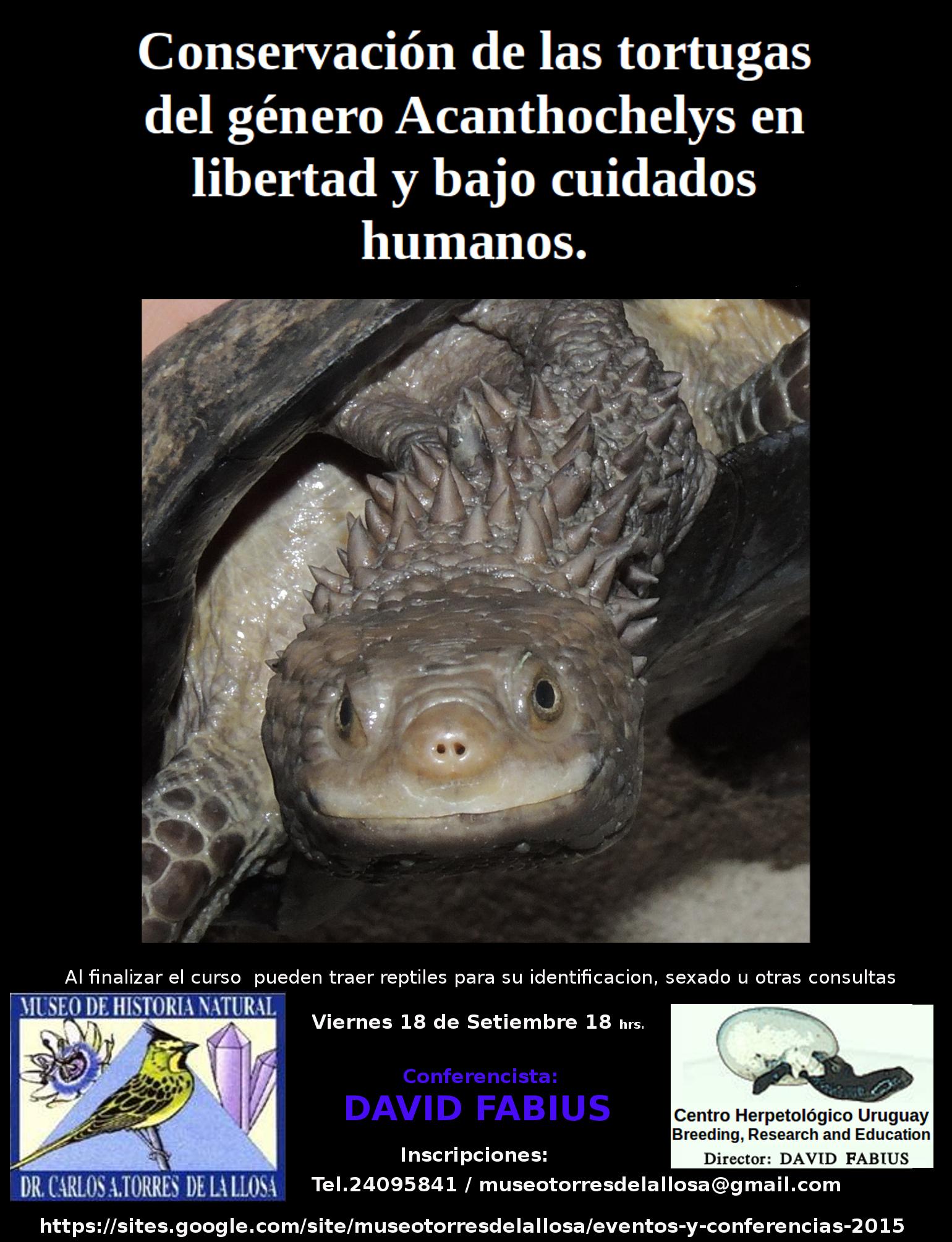 Charla Tortugas