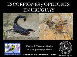Charla escorpiones