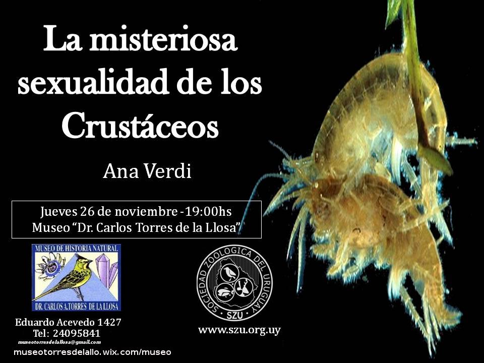 Presentación_Museo_Ana_Verdi
