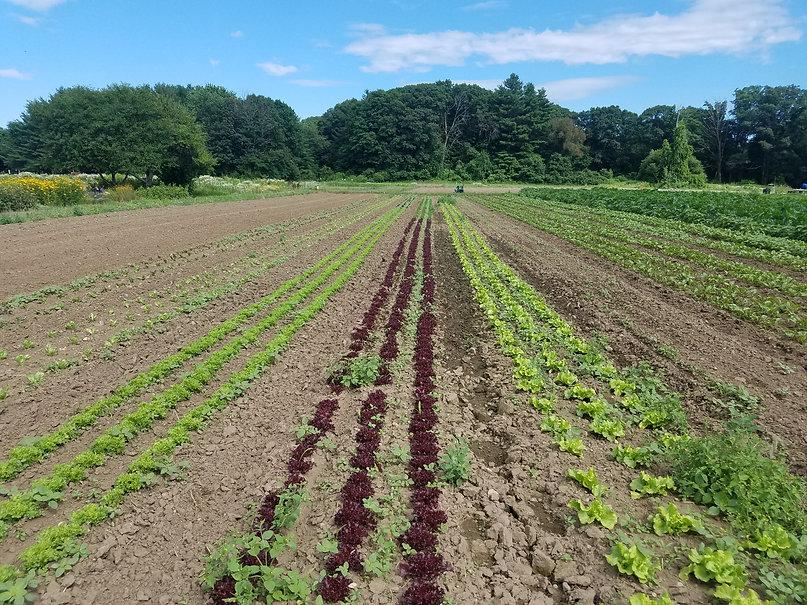 umass-farm.jpg