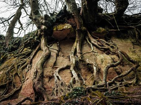 Podcast 9 : Folly Wood and the Headless Horseman