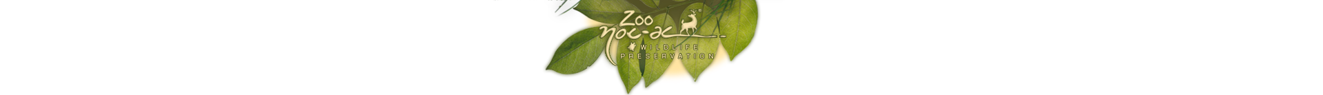 barra de redes zoo en.png