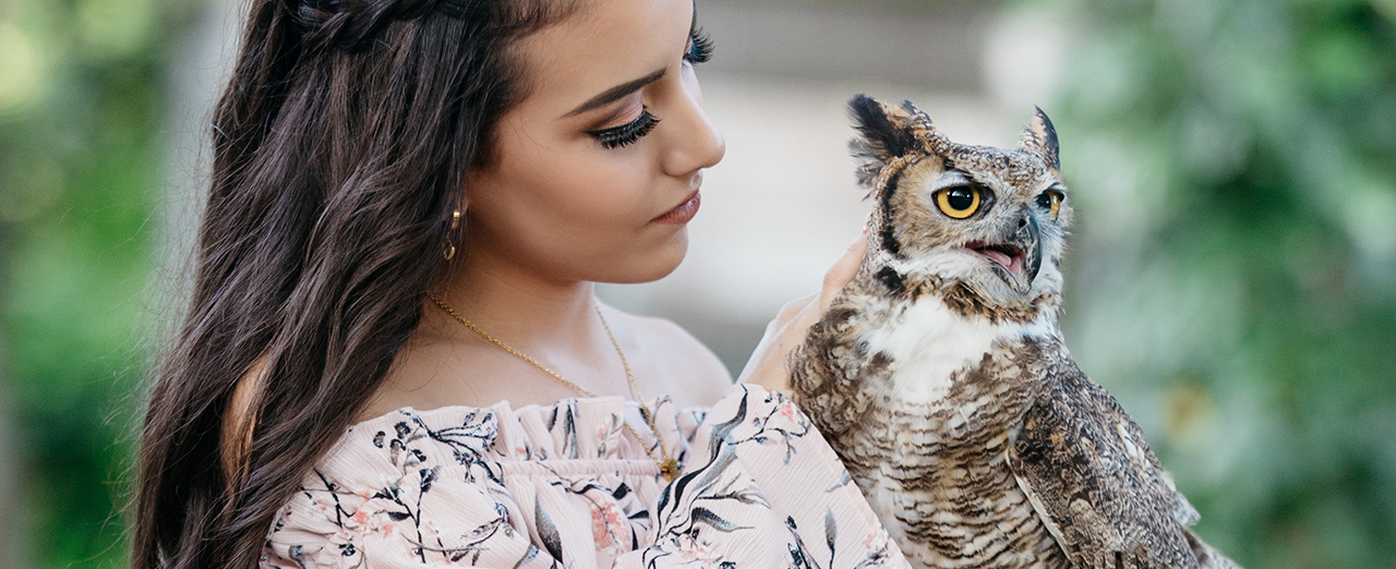 Owl Noc Ac.png