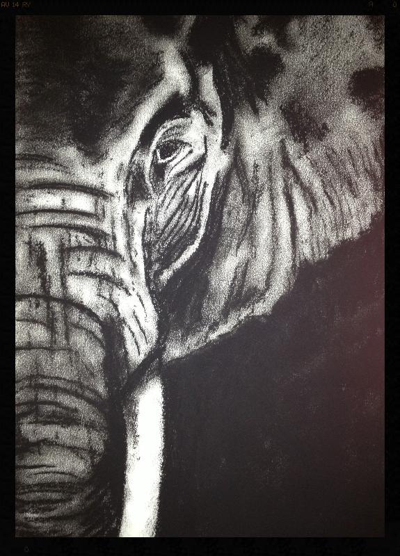 Charcoal Elephant #1