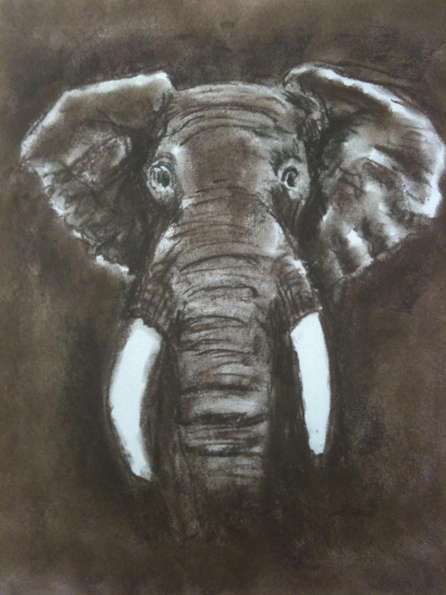 Elephant #2