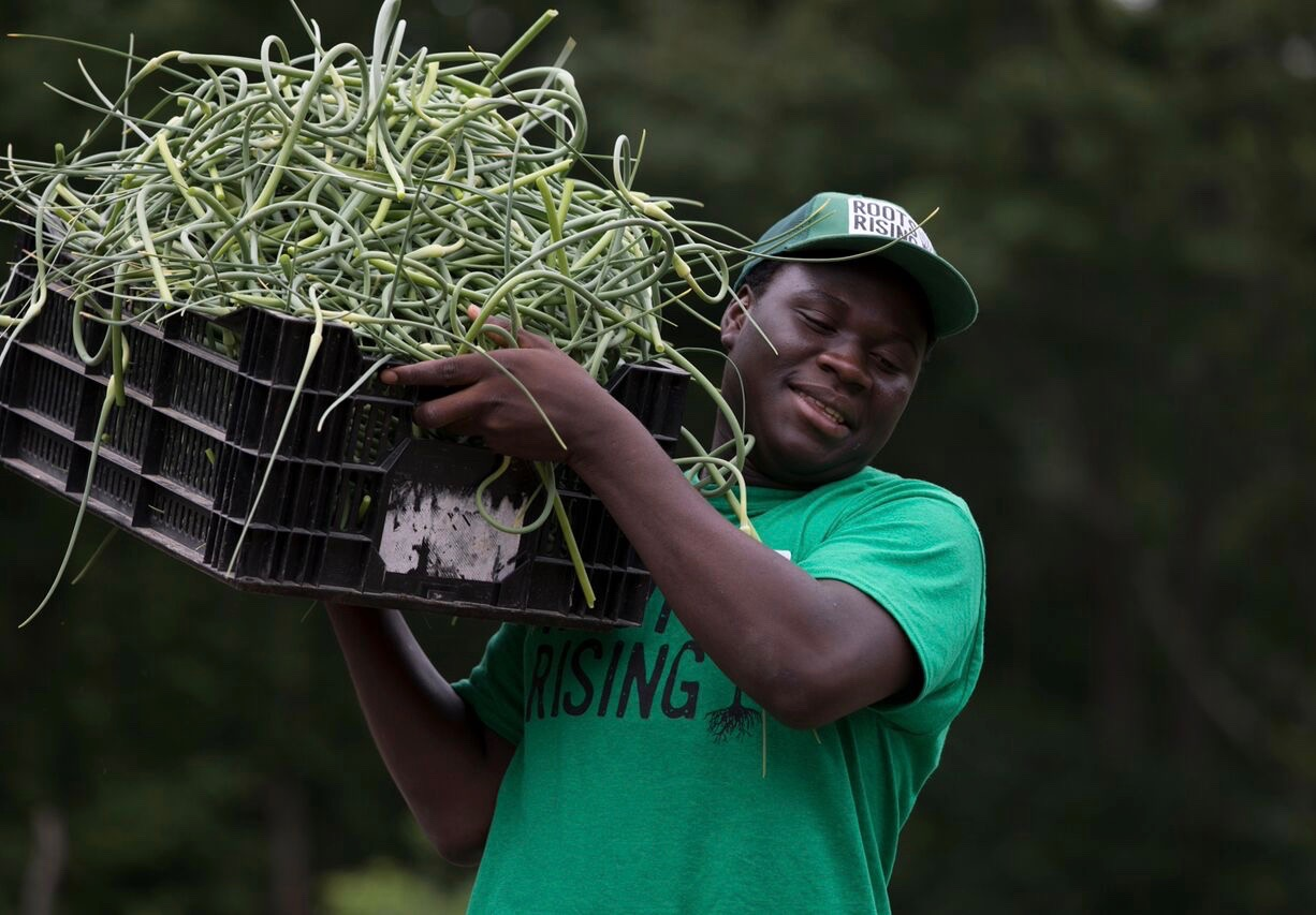 Sumowo hauls a garlic scape harvest.