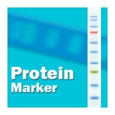 3-Colorプレステイン ハイレンジタンパク質マーカー