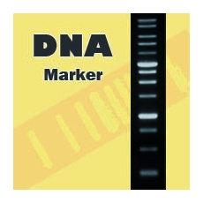 100bp + 3K DNA ラダー