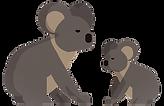 koalas_edited.png
