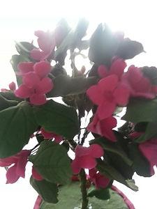 Тайник в горшочке с цветами из полимерной глины купить в СПб