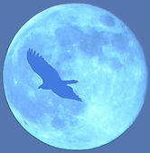 Планета птица.jpg