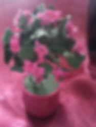 Дерево куст из полмерной глины,украшение декор сувенир из полимерной глины,Цветочное дерево,цветочный куст,издлие декор украшени ручной работы, ручная работа из полимерной глины с тайником