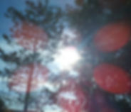 Образ сказочного волшебного дремучего леса